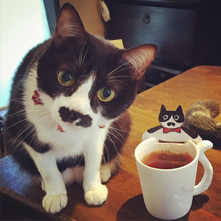 """who dis dumb lookin' cat on my cup?"""