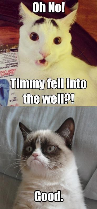 #GrumpyCat #meme For more Grumpy Cat quote, humor and meme visit www.pinterest.com/erikakaisersot