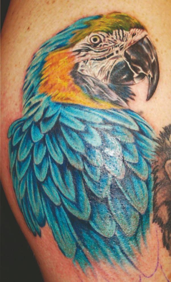 Fotos de Tatuagem Única de Pássaros