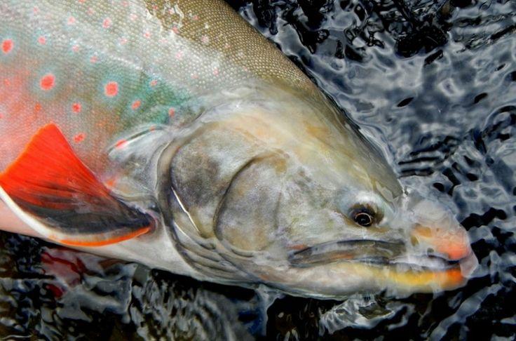nunavut sport fishing