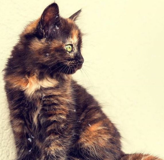 Edna is a Firehouse Cat in San Francisco. Her eviction is