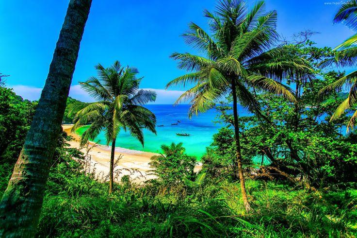 Morze, Plaża, Palmy, Tajlandia
