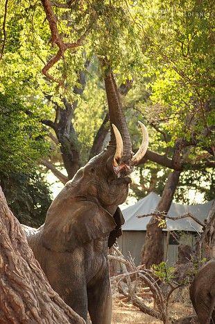 Classic Mana Pools #Ruckomechi #Zimbabwe #safari