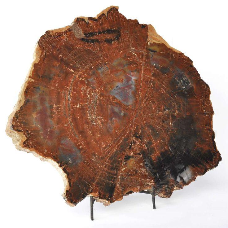 Sunland Home Decor: 132000-005 - 15.5-inch Polished Petrified Wood Slice