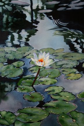 haiku waterlily