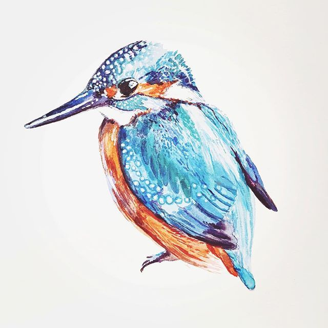 I was reminded this week of one my favourite birds as a child. The Kingfisher. He's an elusive little bird. I've still never seen him. But I hear that he pops out every so often in Booterstown Marsh in Dublin, so I'll be making a hopeful trip there soon. #illustration #watercolour #painting #art #irishart #kingfisher #birdwatching #animalillustration #lovindublin #lovedublin #dublin #ireland #drawing #sketchbook #louisenaughton