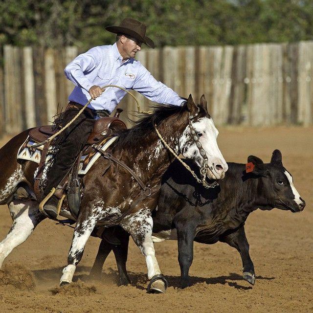 Advanced horsemanship is nothing more than having better basics. - Clinton www.downunderhorsemanship.com