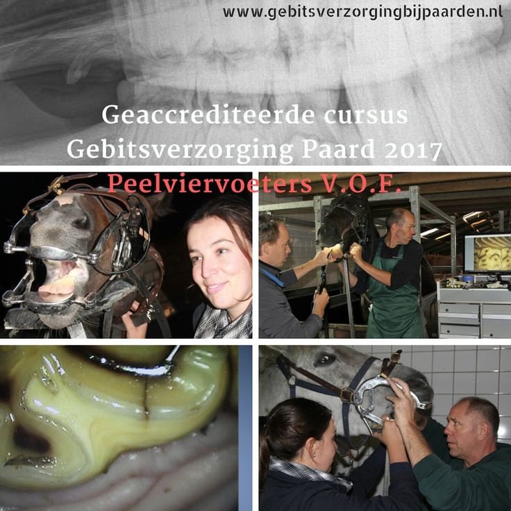 Deze cursus zal dit jaar plaatsvinden op 28 en 29 september 2017.  Meer info: http://www.peelviervoeters.nl/contents/nl/p1938.html