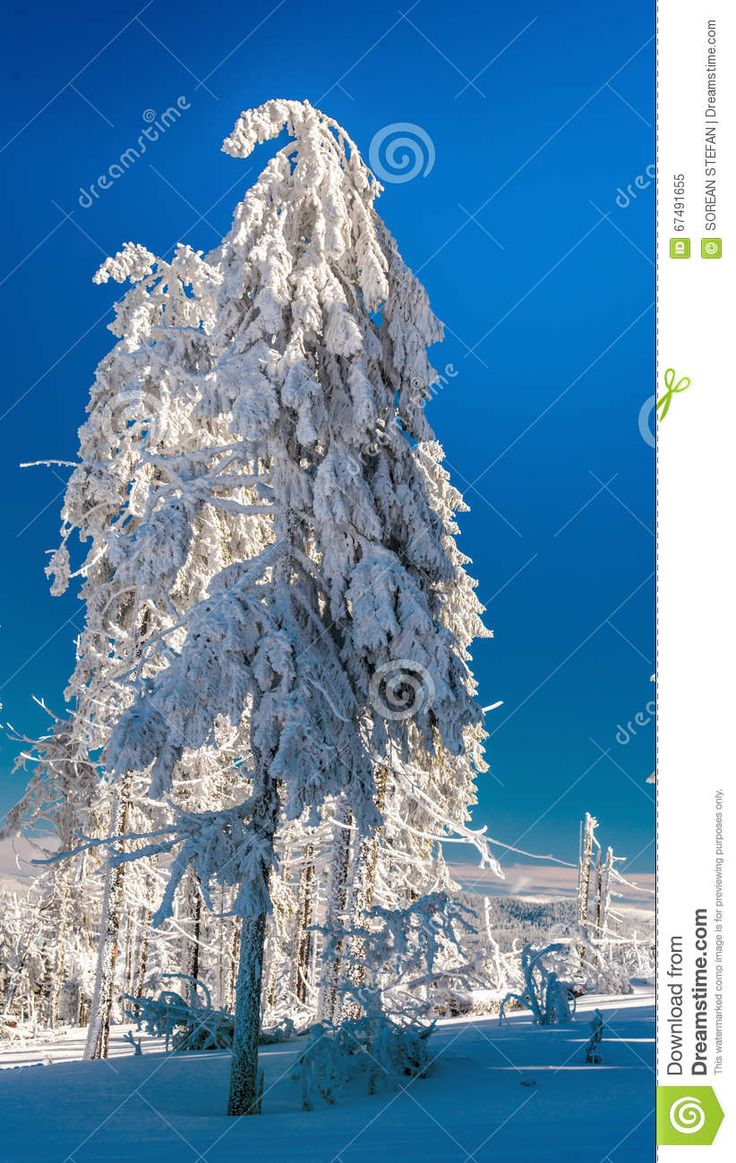 Beautiful Snow Tree - Download From Over 41 Million High Quality Stock Photos, Images, Vectors. Sign up for FREE today. Image: 67491655