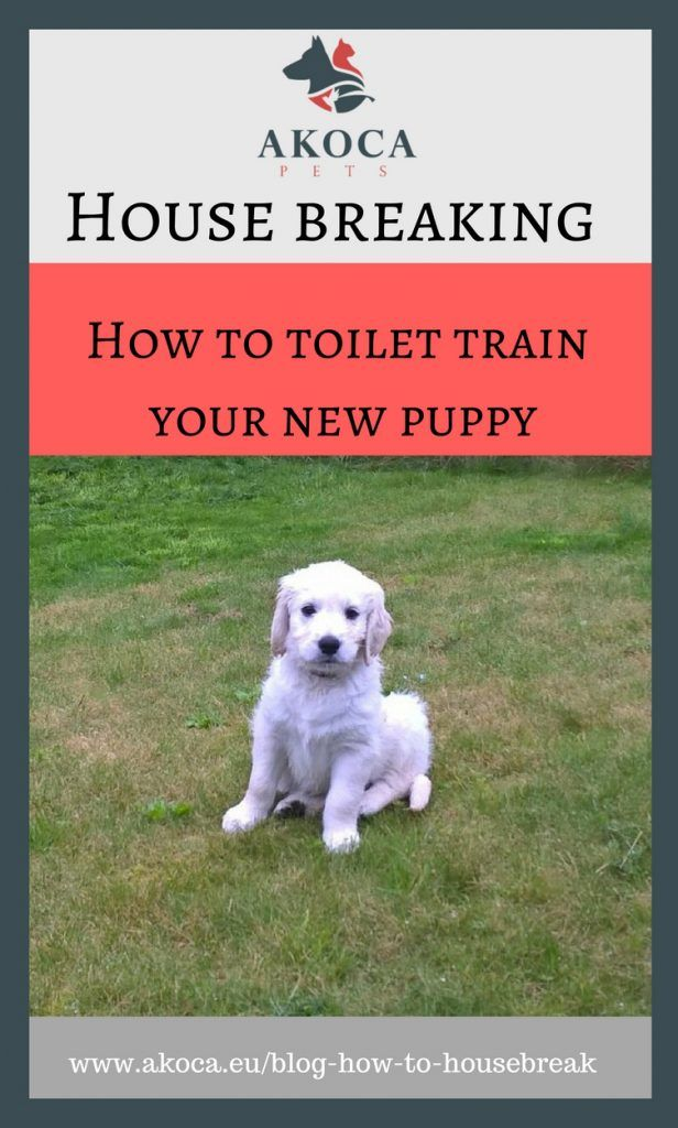 Toilet Training A Puppy Dog Training Tips Dog Training Puppy