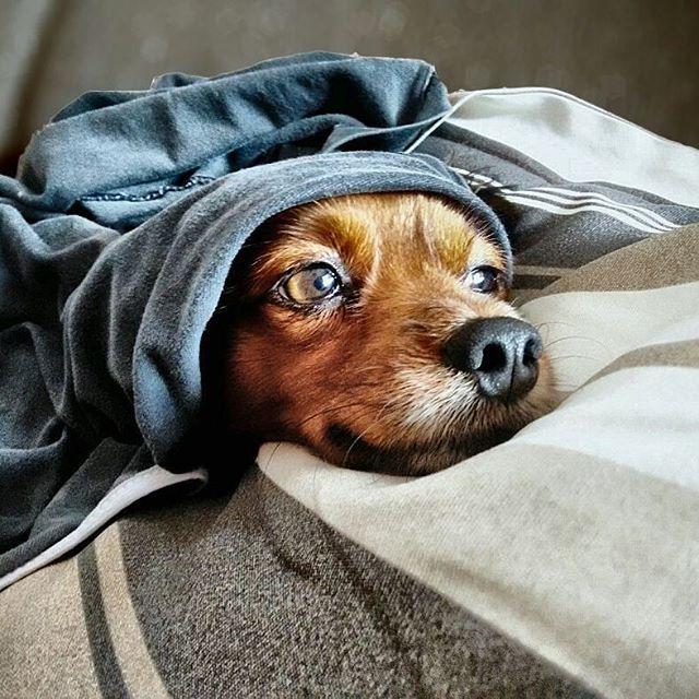 Bom dia!! Quem aí tem cachorro? Esse é o Boby Nelson, um miniatura pinscher misturado com alguma outra raça (nem tão pequeno e super peludo) que faz a alegria da nossa casa. Infelizmente não vamos levá-lo conosco para o mini apê, pois ele vai ficar com minha sogra, já que é acostumado a passar o dia em casa acompanhado e a casa dela é enorme e tem muito espaço para ele brincar (onde moramos atualmente). Ele fica muito triste quando fica sozinho e se passar o dia todo só ele não come nada bem…