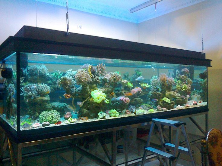 aquarium air laut karya akvodecor