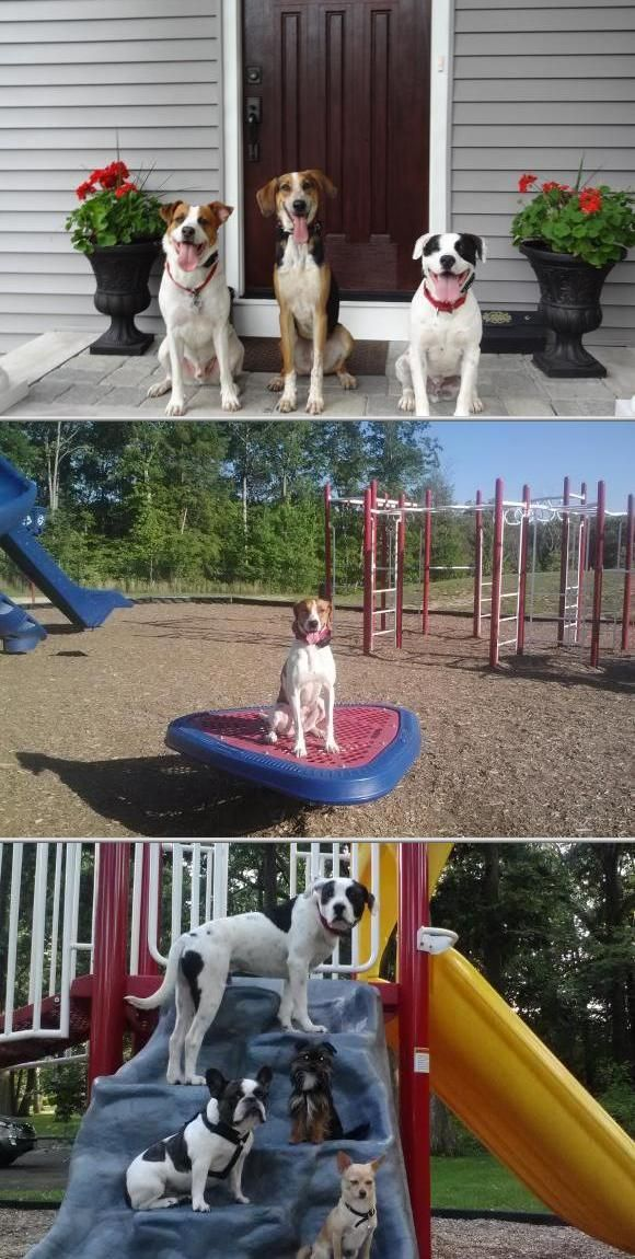 Off-Leash K9 Training is a business that specializes in providing private lessons, dog behavior analysis, and owner education. They do dog obedience classes, off-leash control sessions and more.