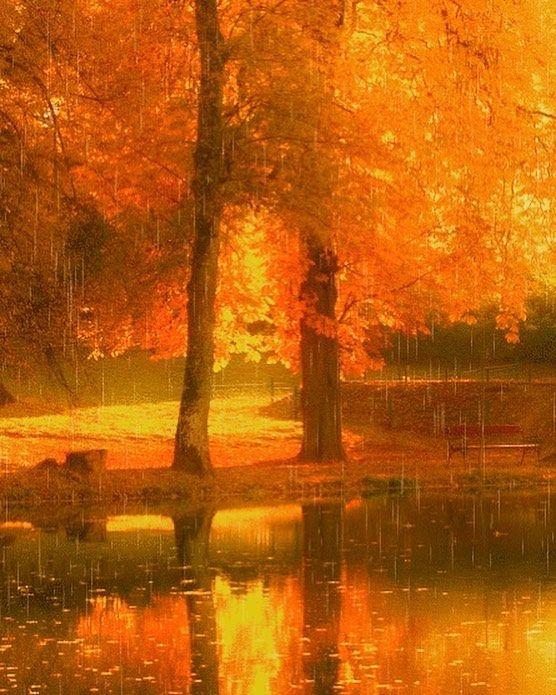 Картинки анимация дождь осенью