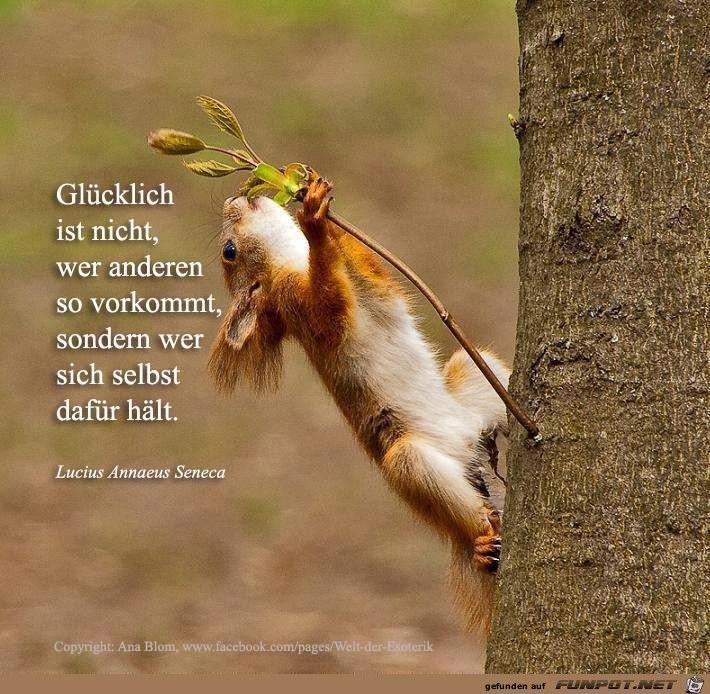 Glücklich | Lustige eichhörnchen bilder, Ausgestopftes