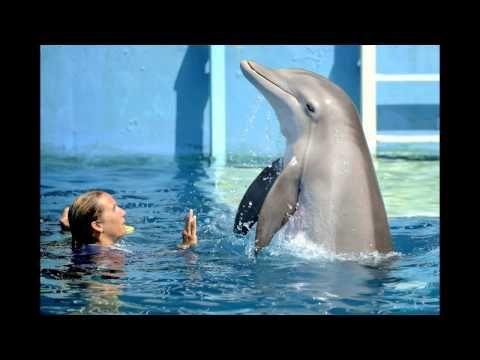//VOIR// L'Incroyable Histoire de Winter le dauphin 2 Streaming Film Complet en Français Gratuit