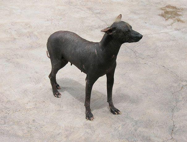 15 animaux sans poils chien 1   15 animaux sans poils difficilement reconnaissables   wombat rat poil plume photo perroquet ours manchot lap...