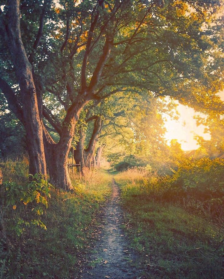 Dappled light on the path (Copenhagen, Denmark) by Henrik Koskelo (@hentus)