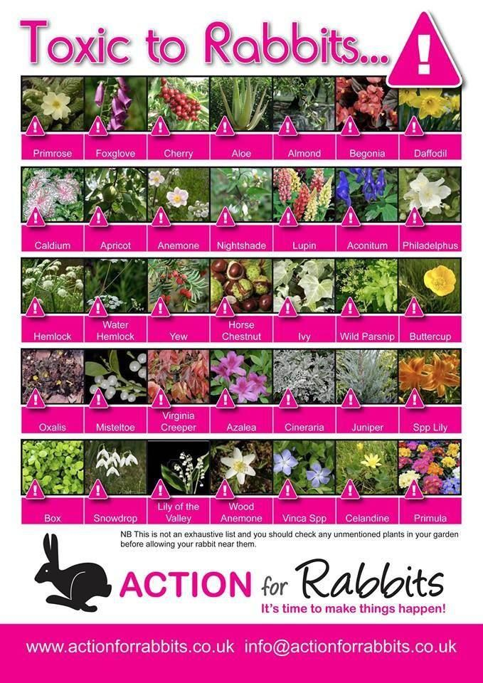 Good info on plants that are poisonous to rabbits.