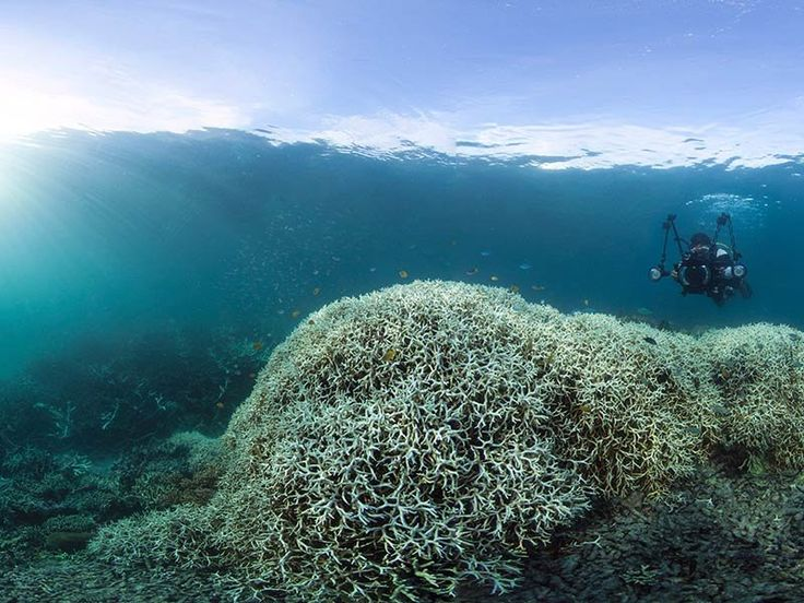 Warm ocean temperatures have impacted large swaths of the Great Barrier Reef in the last month, part of a worldwide coral die-off