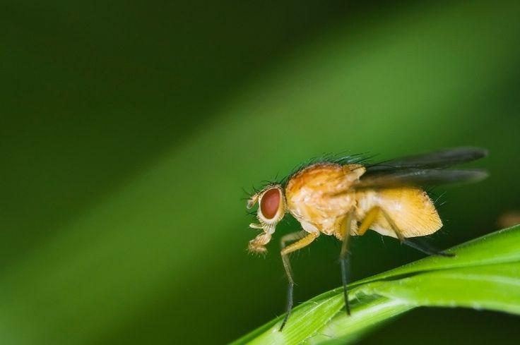 Otravujú vás drobné mušky v izbových rastlinách? Skoncujte s nimi!