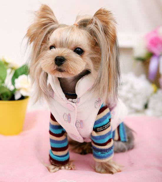 Бесплатная доставка осень и зима чешские розовая полоса собака вязать свитер животное одежды одежда купить на AliExpress