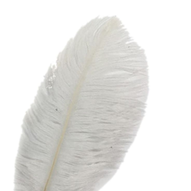 Beautiful 10PCS Ostrich Feather 15-20cm Wedding Decoration Party Plumage Decorative Celebration White #clothing,#shoes,#jewelry,#women,#men,#hats,#watches,#belts,#fashion,#style