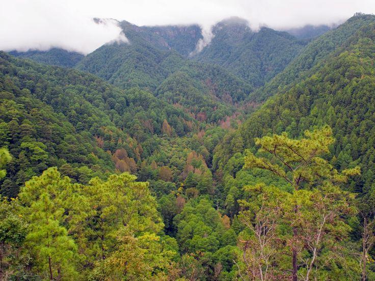 Les vestiges d'une cité perdue exhumés au Honduras : Geo.fr