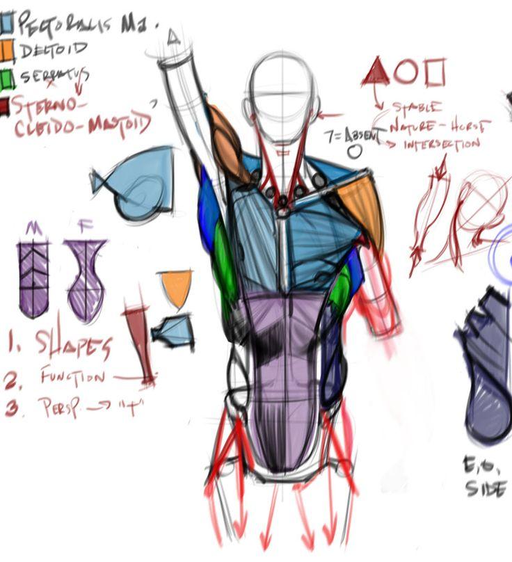 11 besten Anatomy Bilder auf Pinterest | Anatomie zeichnung, Lernen ...