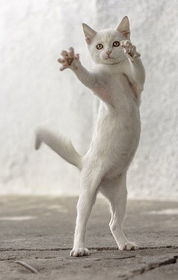 Isadora Duncan, Martha Graham, Twyla Tharp and now Blanche LeChat master of interpretative dance.