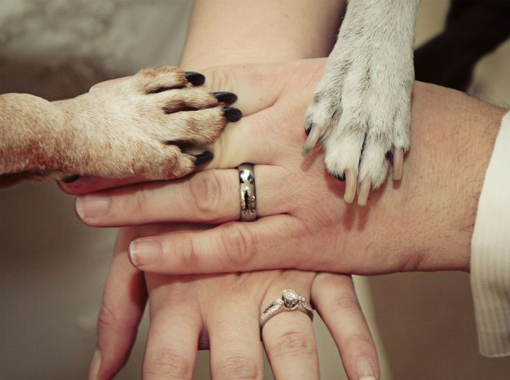 #nunta #familie