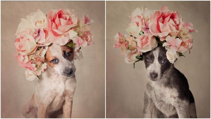 A Photographer Dressed These Shelter Dogs Up In Unique Outfits Hoping To Find…