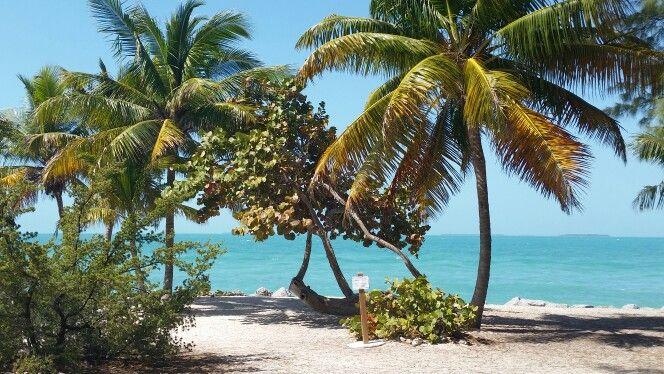 Palm trees make me happy