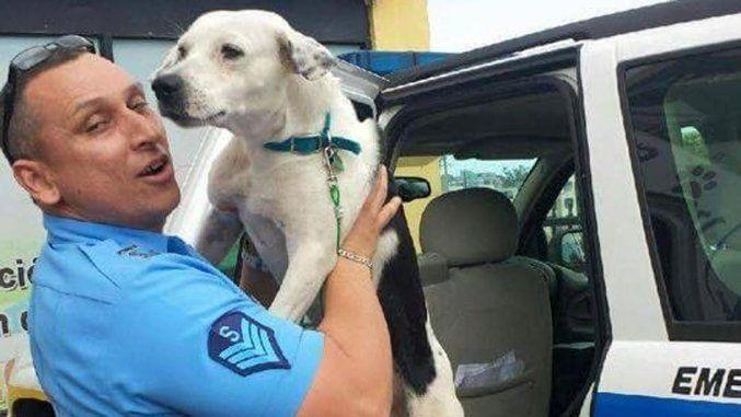 Cane randagio entra in una stazione di polizia e trova lavoro e una famiglia