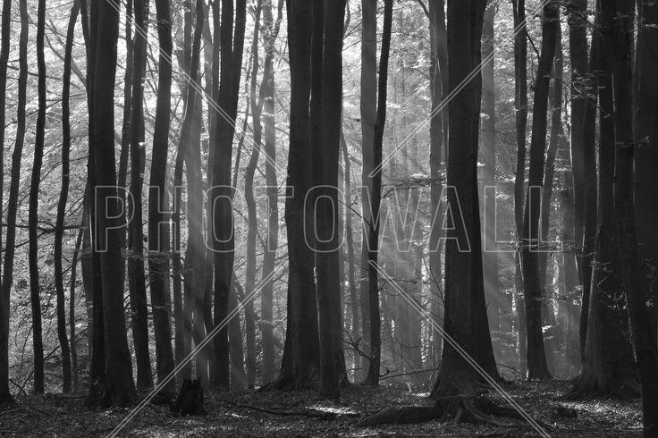 Fairy Forest - Fototapeten & Tapeten - Photowall