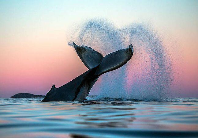 Audun Rikardsen é professor de biologia marinha na Universidade de Tromsø, na Noruega, e consultor científico do Instituto Norueguês para o Estudo da Natureza. Por conta de sua profissão, ele possui uma visão inigualável sobre o mundo das baleias. Em 2010, Rikardsen começou os animais durante seu trabalho de campo e rapidamente se tornou um...