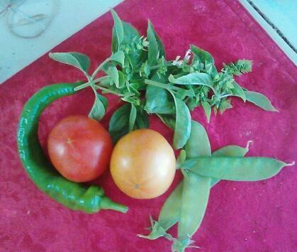 First harvest 7 April.