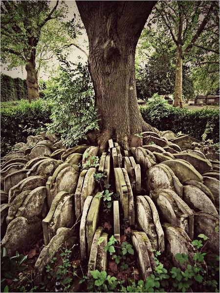 The Hardy Tree St. Pancras Churchyard. Thomas Hardy, the English novelist and poet, was in charge of the 1860s excavation of the graveyard of St Pancras Old Church prior to its destruction when the Midland Railway was extended to a new terminus. He arranged these stones around the tree, which has since grown into them.