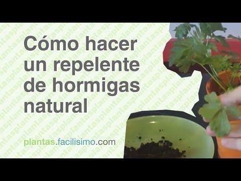 17 mejores ideas sobre repelente de hormigas en pinterest - Que hacer contra las cucarachas ...