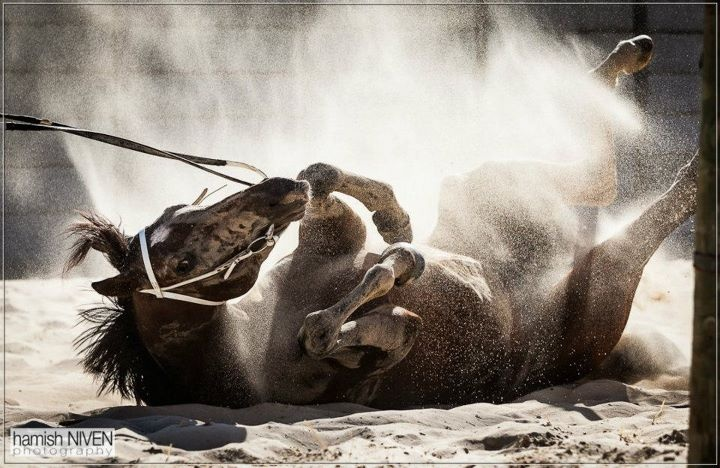 every moment captured of this horse shows his power, his strength and athletism.