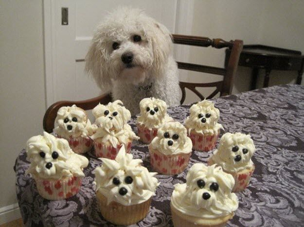 """This reminds me of our first dog, Monte.  Now, I can make cute cupcakes of him:)  Funny story, my mom found this and she had made a lamb for Easter and when are kids saw it - they said, """"It's Monte!"""": Animals, Idea, Dogs, Cupcakes, So Cute, Food, Funny, Puppy"""