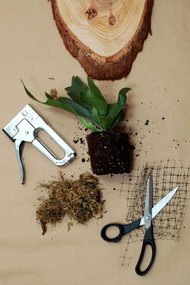 Make a mounted staghorn fern, laura oster