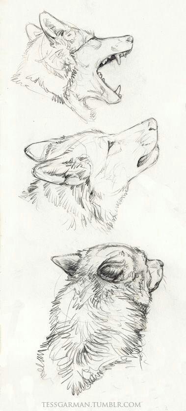 Wolf sketch, tumblr