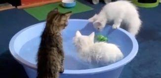 Mindenki a videóban szereplő cicákról beszél. Derítsd ki miért!