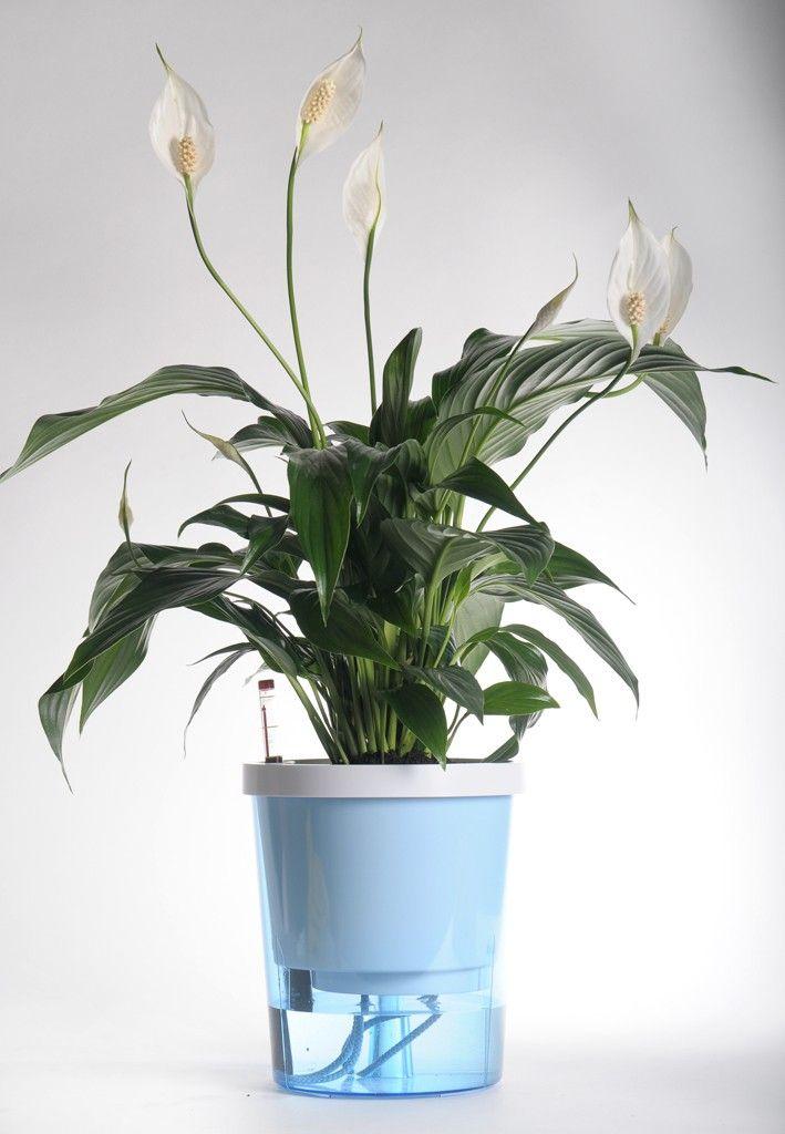 Superhandig! Planten hoeft je maar 1 keer in de maand water te geven, de pot regelt het water geven zelf!