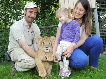 Raising funds for transplant awareness at Elmvale Jungle Zoo - Mila is shown her with her dad, Karl Kasper, left, and mom Michelle Persi, right, and one of the new stars of the Elmvale Jungle Zoo, Tobias, an eight-week-old Lion Cub.
