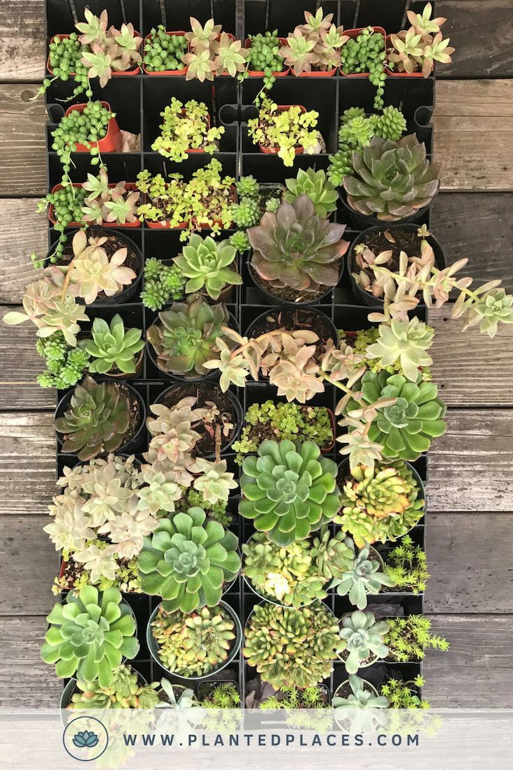 Build Your Own Vertical Garden Living Wall With These Diy Garden Kits Get Your Diy On Succulent Wall Garden Vertical Herb Garden Succulent Garden Diy Indoor Succulent living wall planter kit