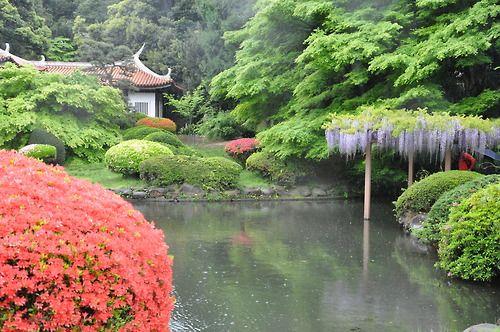 Tokyo 5:  Jardin impérial de Shinjuku  posted byL'Art de la Curiosité