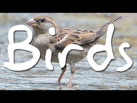 Birds | Learn English | Interesting English