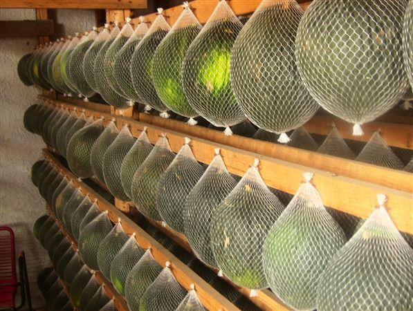 Rete estrusa in Mater-Bi®, ideale per il confezionamento di frutta e verdura fresca.
